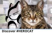 Tara Hero Cat